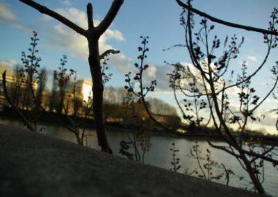 végétation des quais à la Défense©JulienBarret