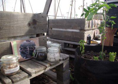 Visite du toit potager de l'école AgroParisTech-10