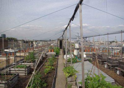 Visite du toit potager de l'école AgroParisTech-12
