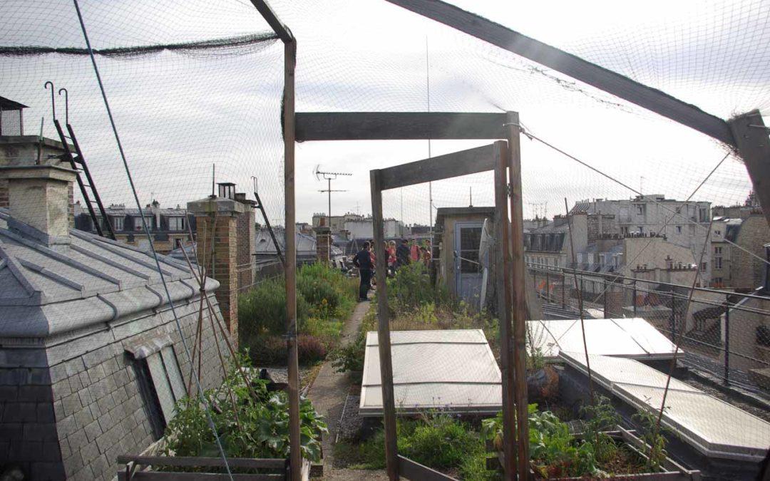 Visite du toit potager de l'école AgroParisTech