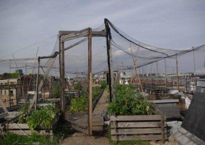 Visite du toit potager de l'école AgroParisTech-15