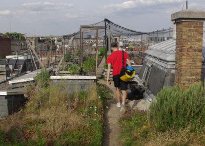 Visite du toit potager de l'école AgroParisTech-17