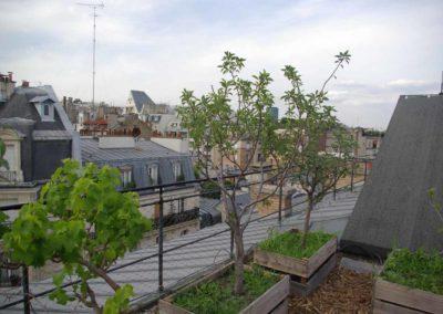 Visite du toit potager de l'école AgroParisTech-20
