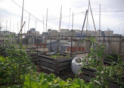 Visite du toit potager de l'école AgroParisTech-4