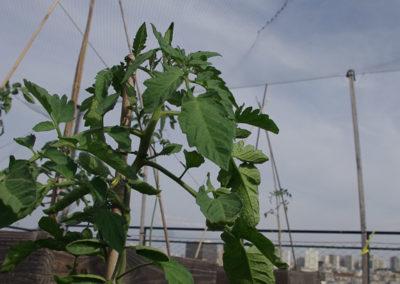 Visite du toit potager de l'école AgroParisTech-5