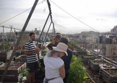Visite du toit potager de l'école AgroParisTech-6