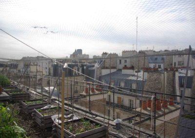 Visite du toit potager de l'école AgroParisTech-7