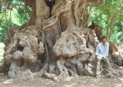 Les Brigades Vertes, entre le Sahel et Clichy-la-Garenne