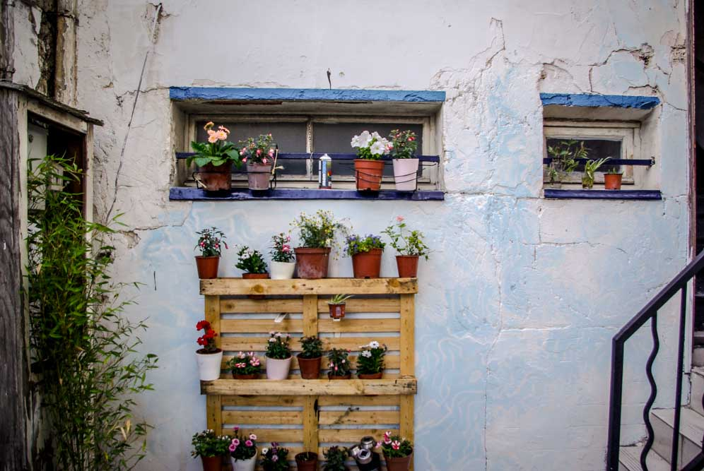 Petits pots de fleurs dans la cour intérieure du squat @J.Barret