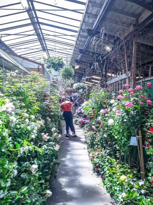 Le marché aux fleurs de la Cité par J Barret